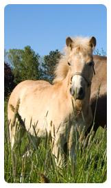 Horsemilk Lotion Shampoo Cream Powder Capsules Skinlotion Horsemilkery Freeze Dried