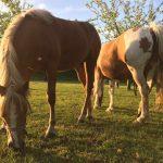 Horsemilk / Maremilk / Horsemilkery / Horsemilk products